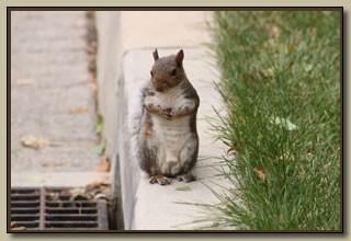 mar_squirrel